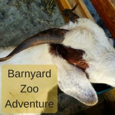 Animals at a Barnyard Zoo